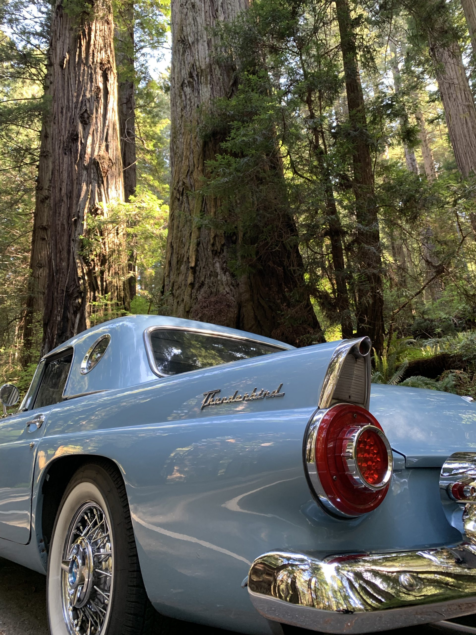 1956 Ford Thunderbird Rear Side By Redwood Trees
