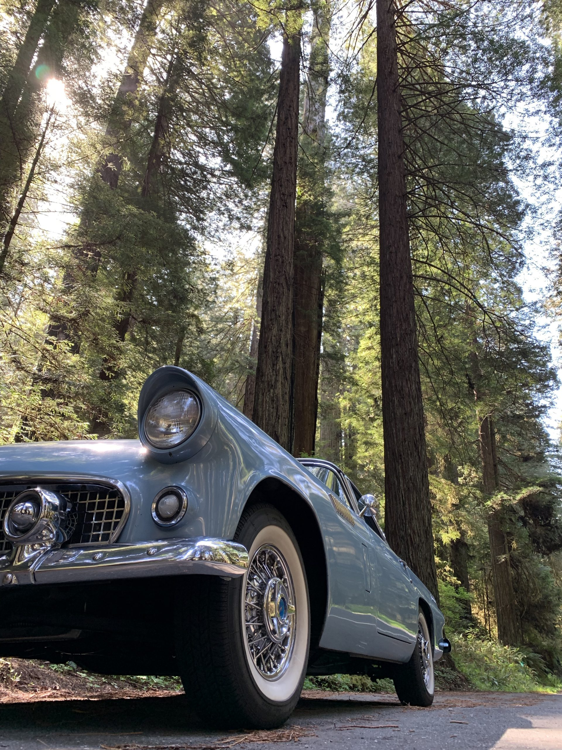 1956 Ford Thunderbird Front Side By Redwood Trees