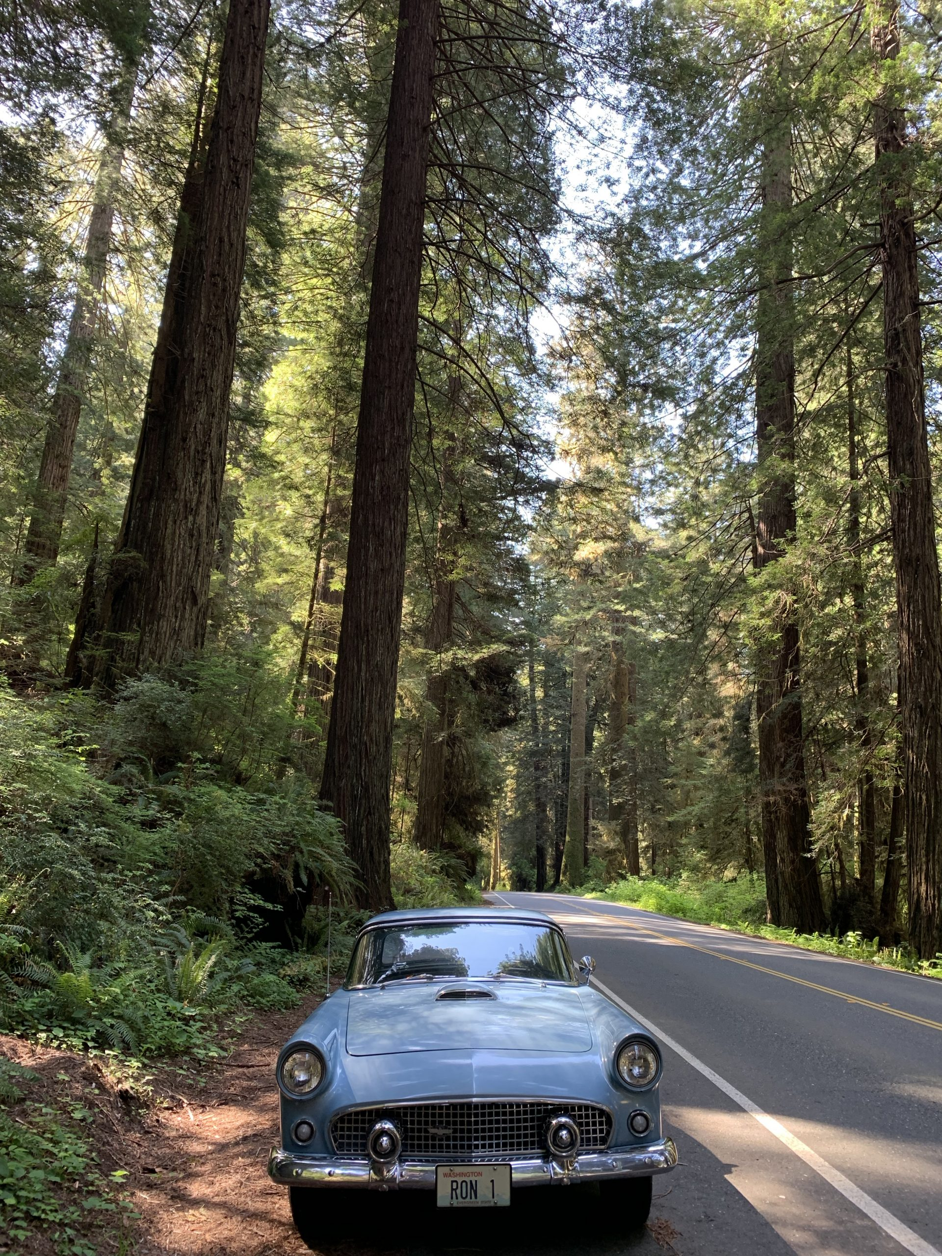 1956 Ford Thunderbird In Redwood Forest