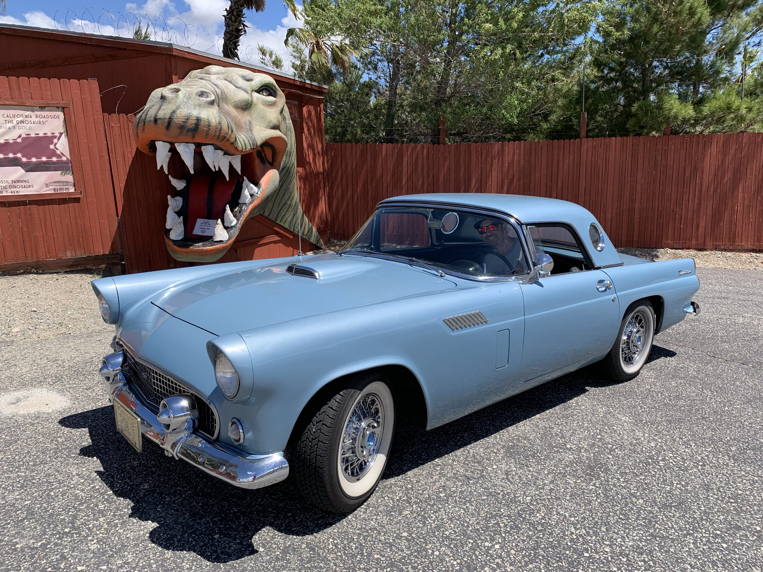 1956 Ford Thunderbird Owner Behind Wheel At Dinosaur Museum