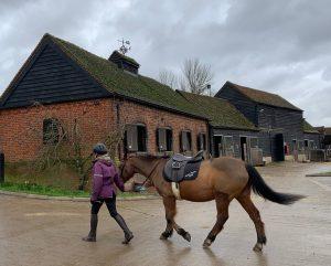 Barn Find Hunter UK - Horse farm