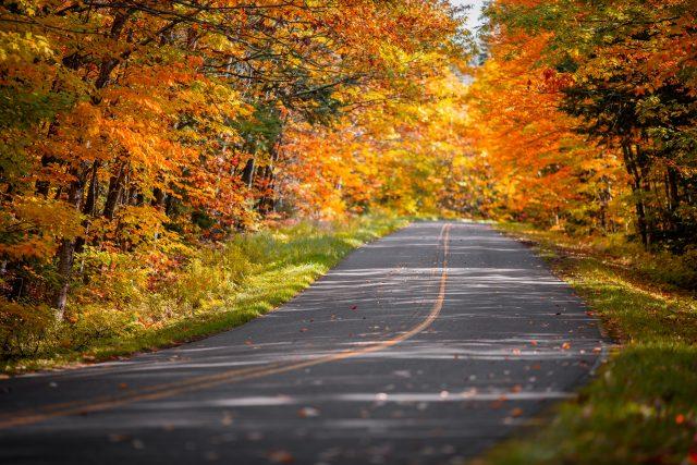 fall color trees michigan upper peninsula