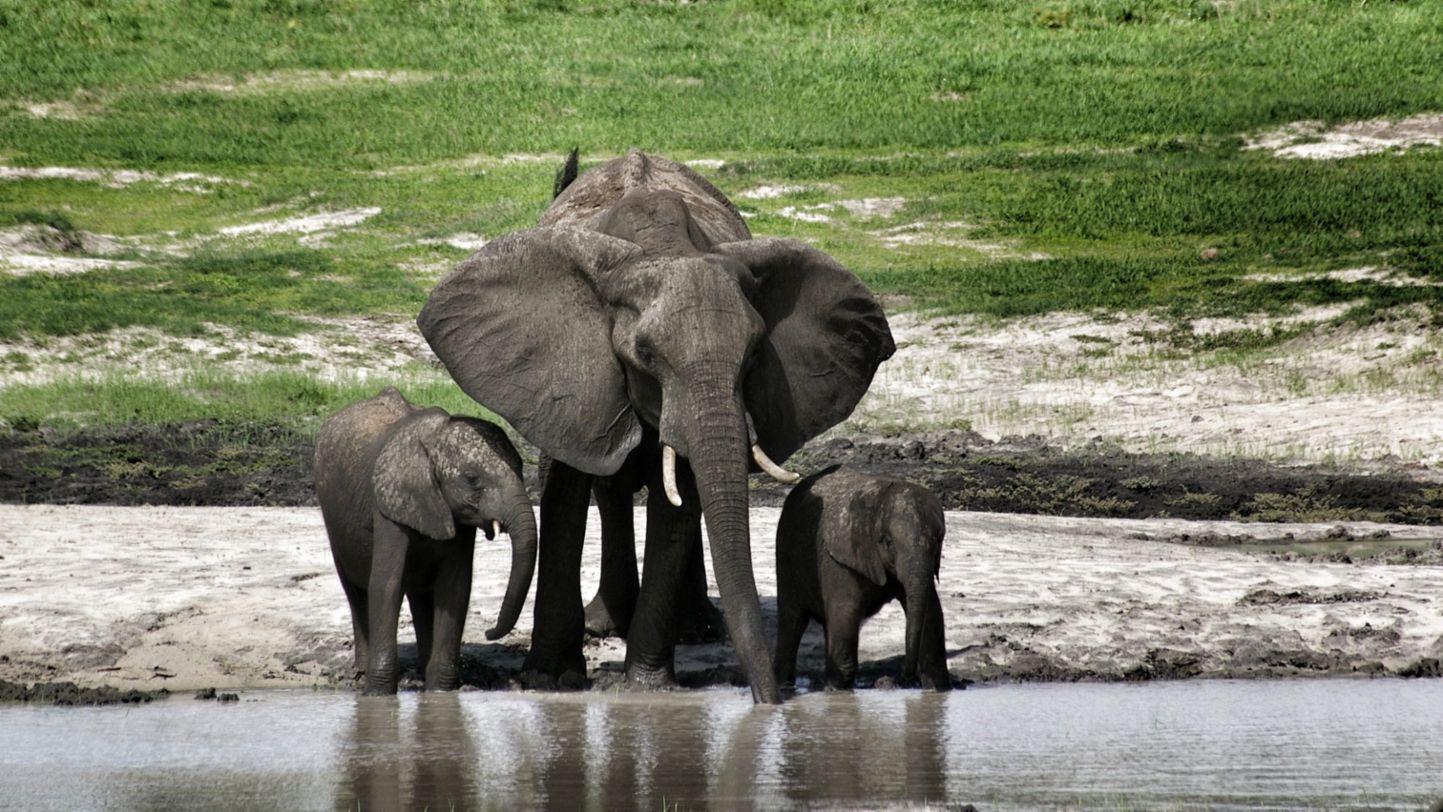 Africa Porsche 944 elephants