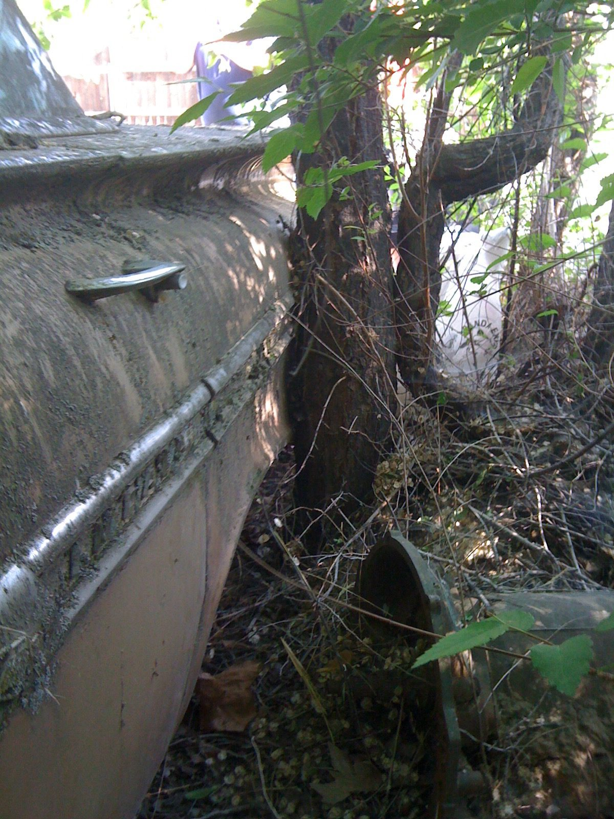 1959 Chevrolet Impala side and tree unrestored