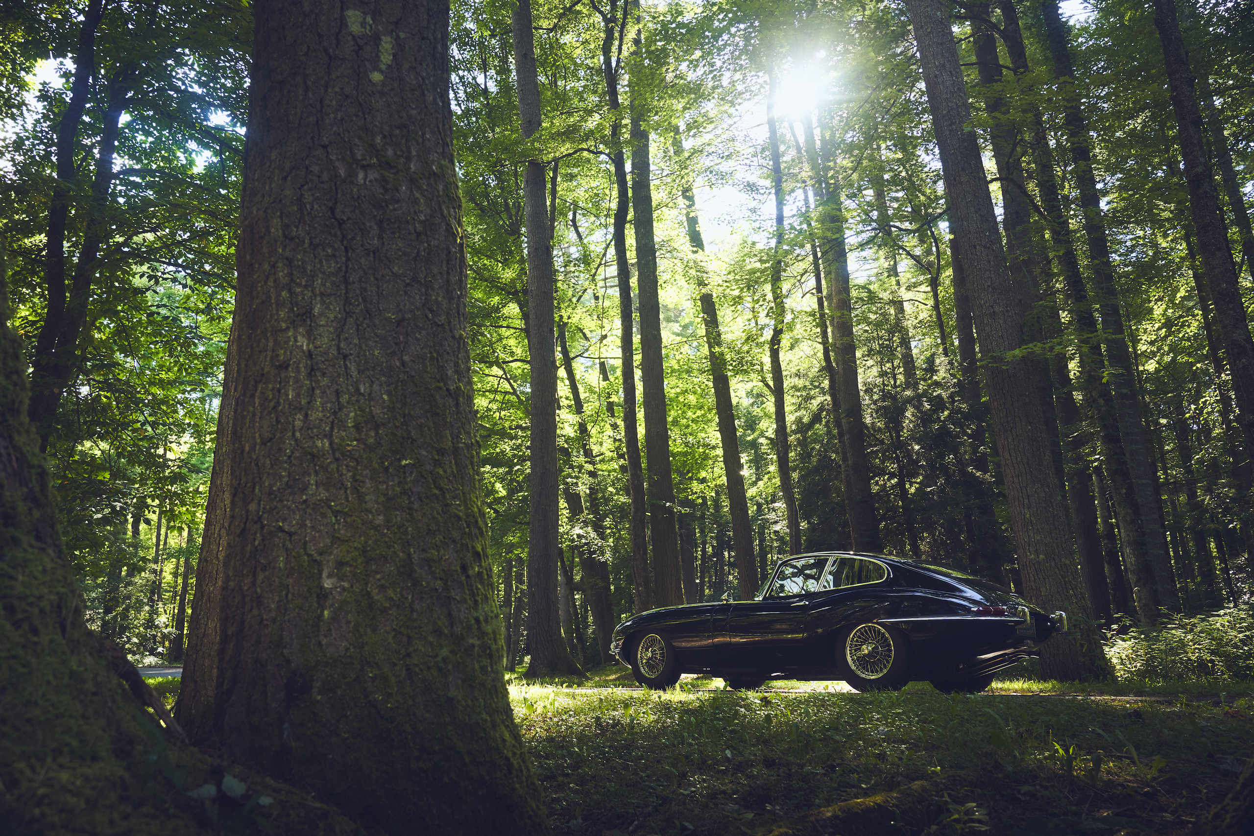 Jaguar E-Type rear three-quarter forest