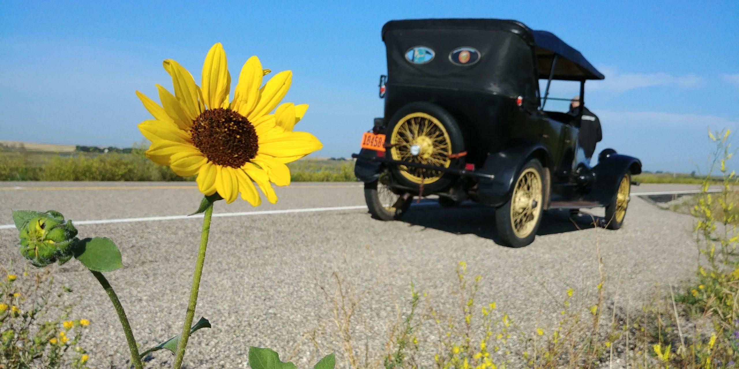 1919 Franklin sunflower stop