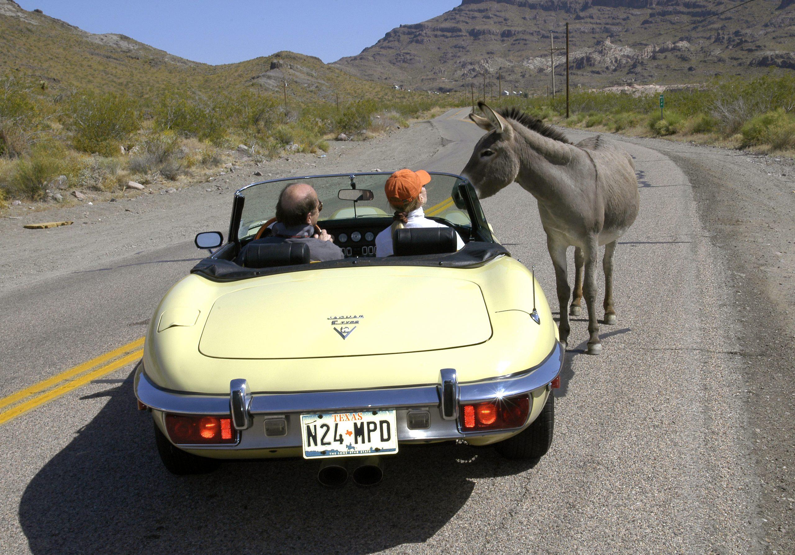 Route 66 Reunion jaguar donkey