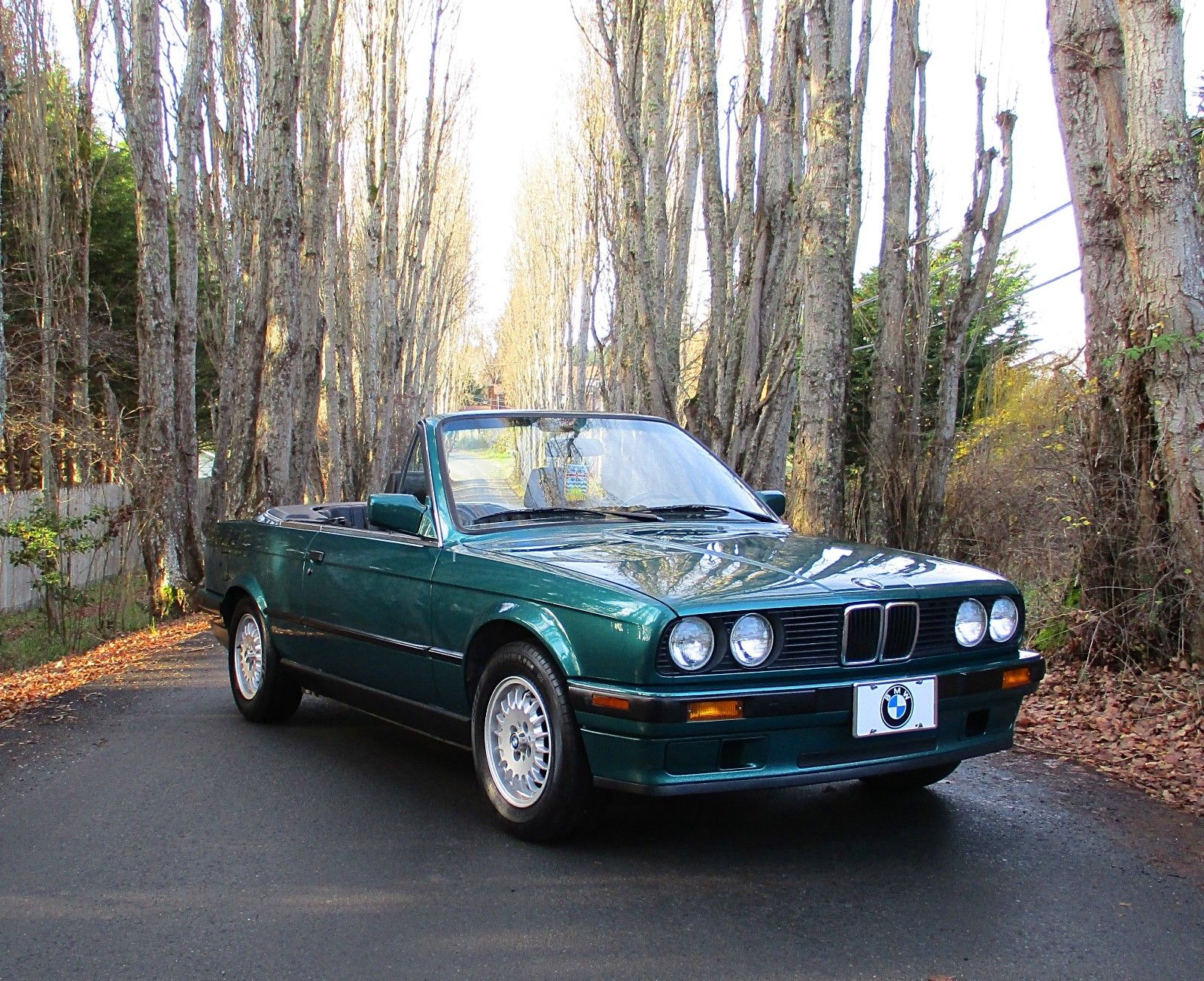 bmw 318i convertible front trees