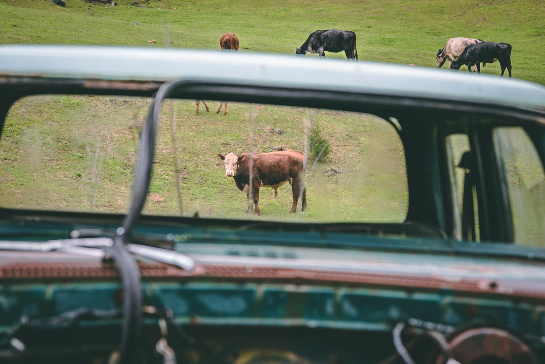 Barn Find Hunter car through windshield