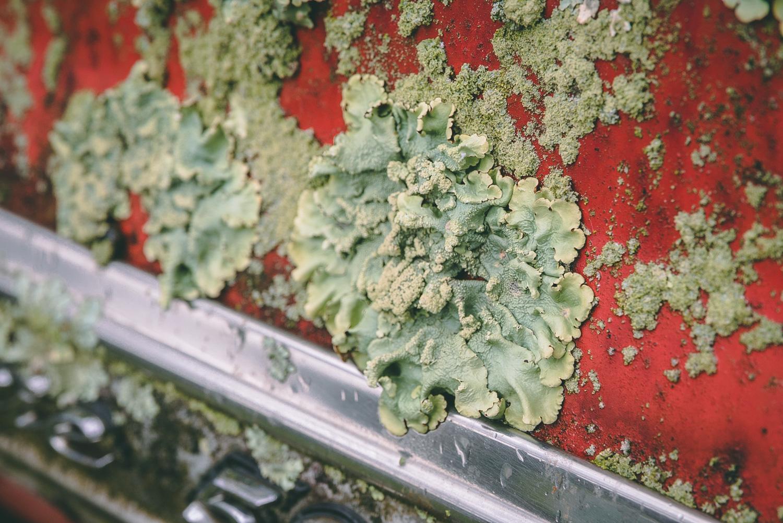 Barn Find Hunter moss lichen growth on car