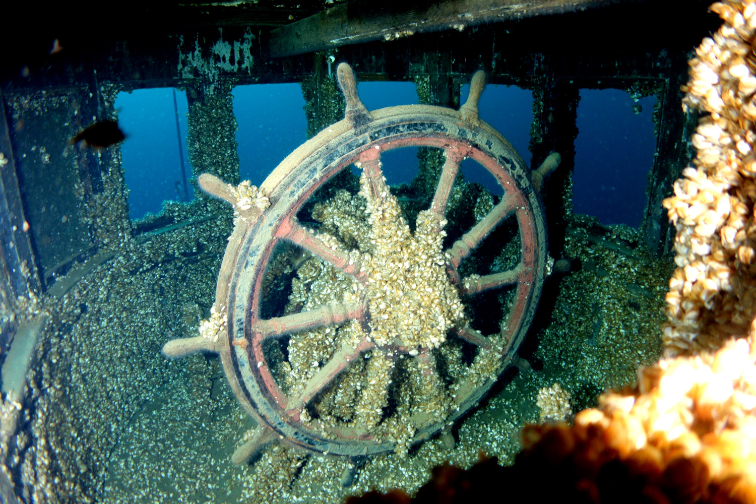Despite being mostly covered by invasive zebra and quagga mussels, the MANASOO's wheel remains readily identi- fiable.