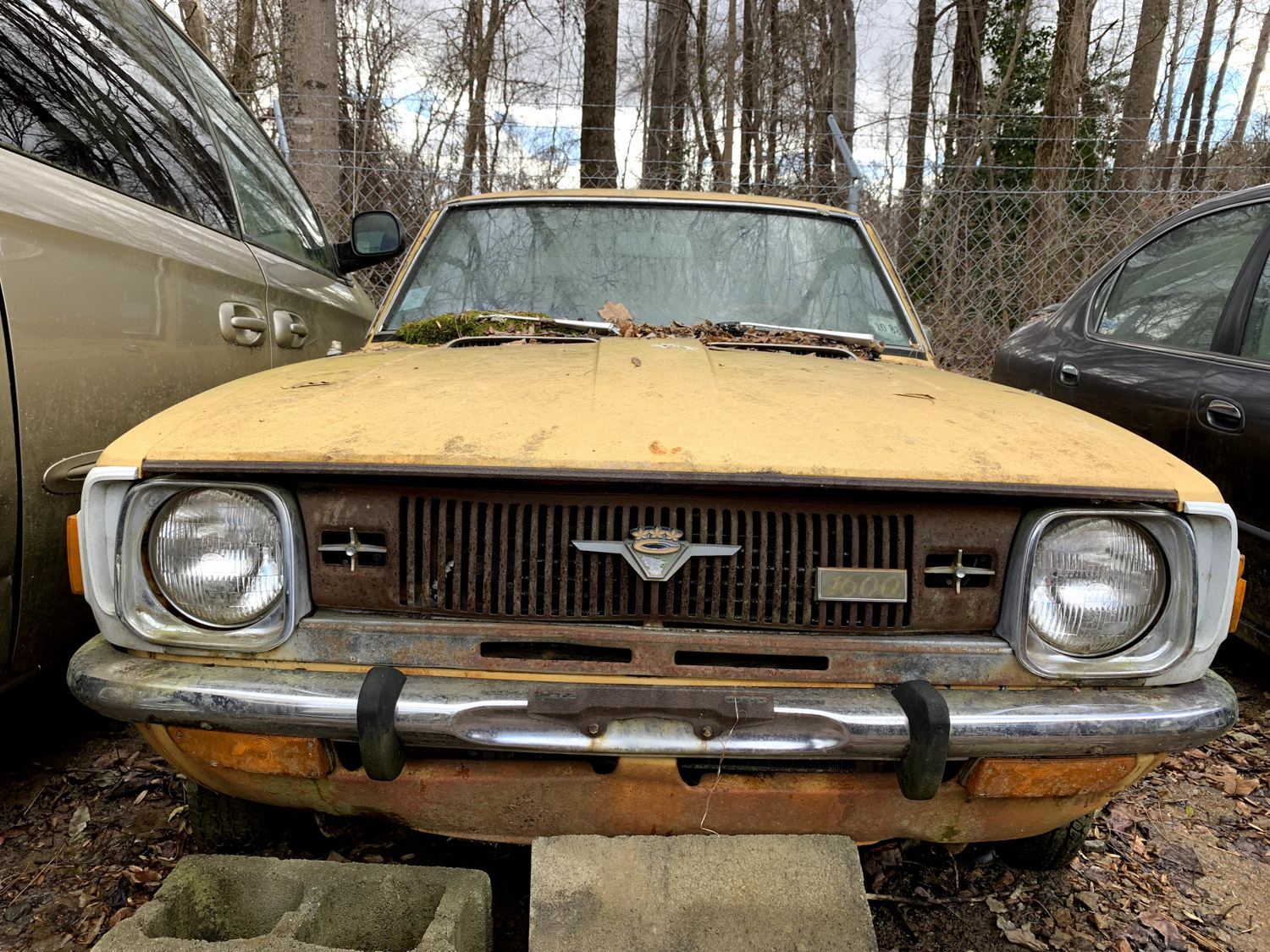 yellow moss covered car front end