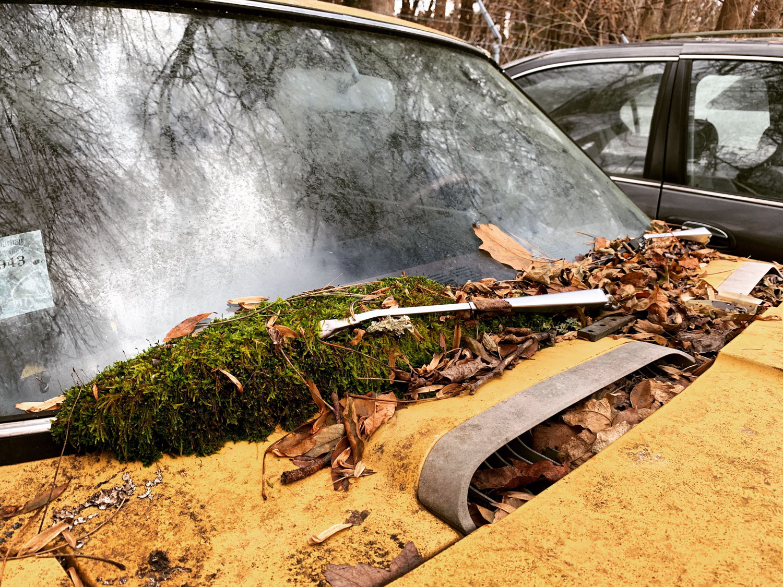 windshield moss on wiper