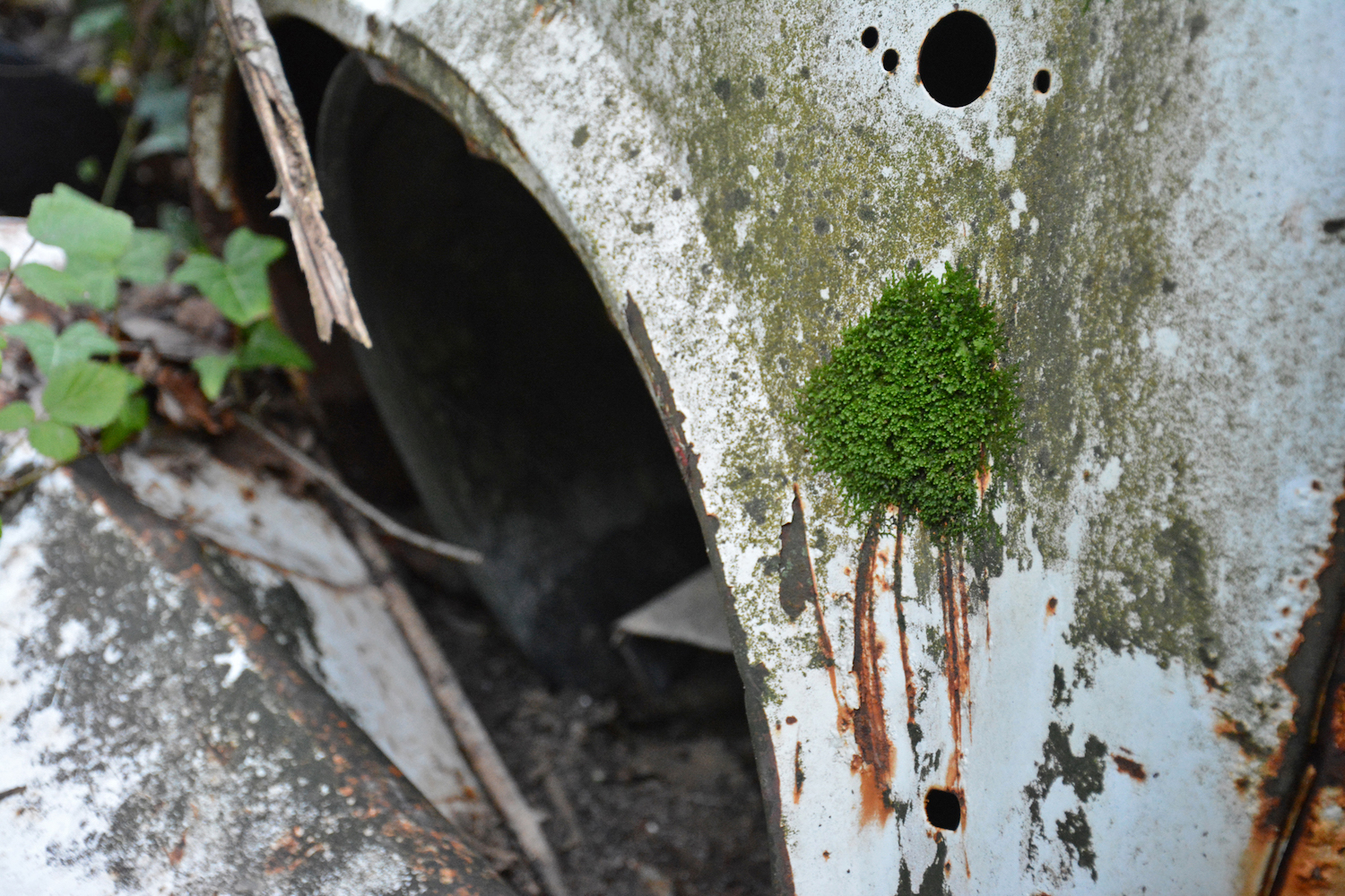 abandoned old car moss grows on metal