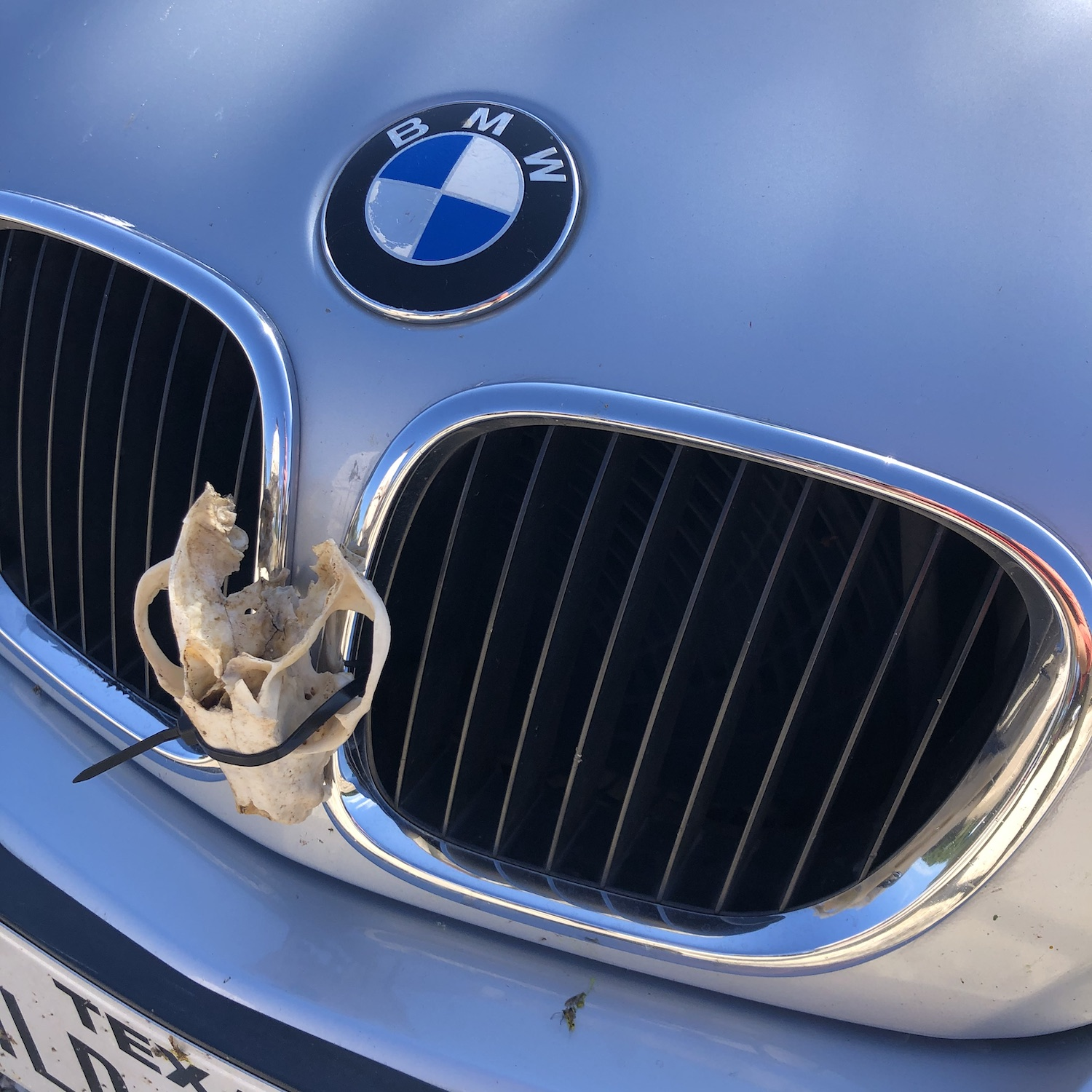zip tied animal skull on bmw z3 front grille
